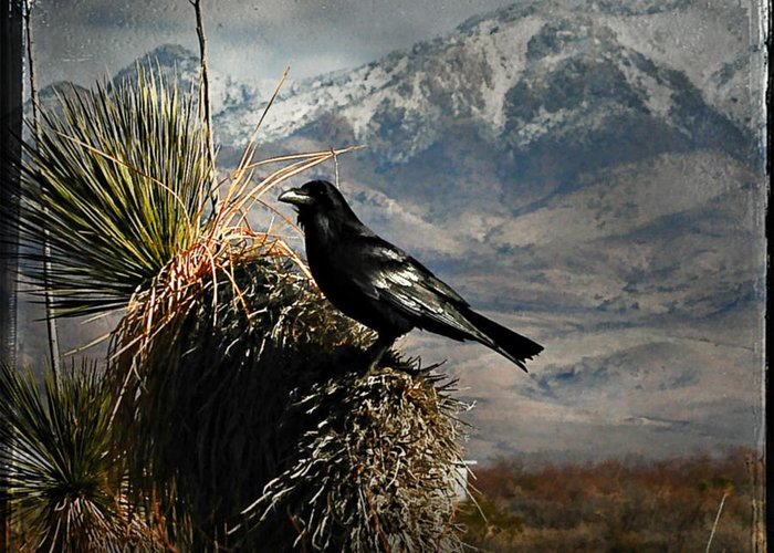 Bird Greeting Card featuring the photograph Raven Storm by John Forrey