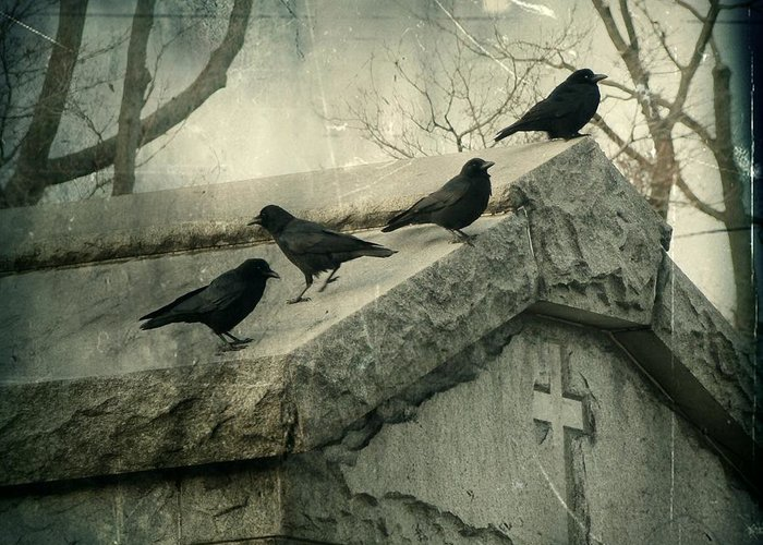 Crows Mingling Photographs Greeting Cards