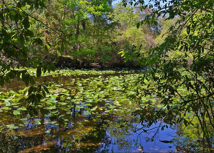 Pond Greeting Card featuring the photograph Ravine Gardens - A Different Look At Florida by Christine Till