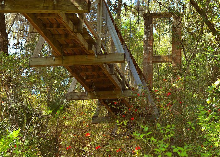 Swinging Greeting Card featuring the photograph Ravine State Gardens Palatka Florida by Christine Till