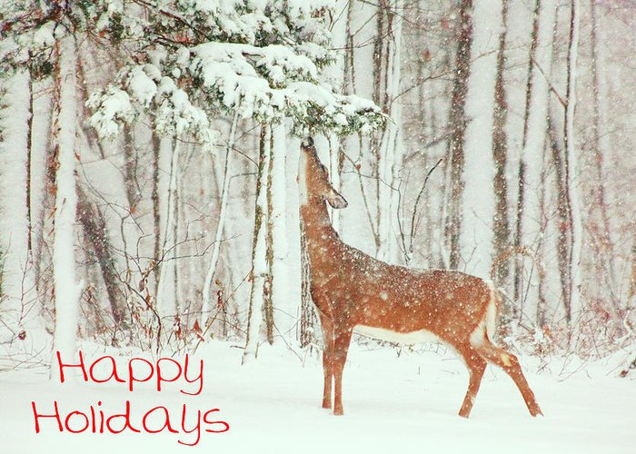 Deer.holidays Greeting Card featuring the photograph Reach For It Happy Holidays by Karol Livote