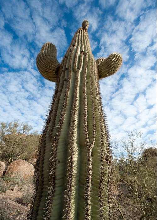 Cactus Greeting Card featuring the photograph Reaching For The Sky by Paul Johnson