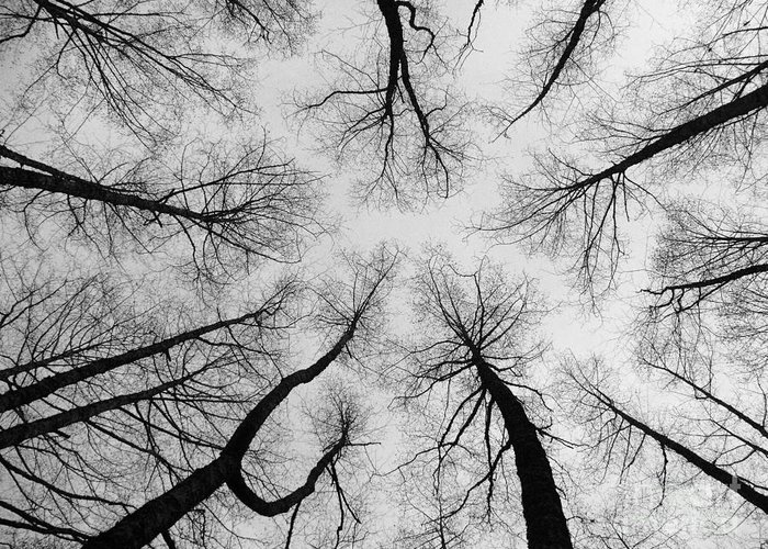 Trees Greeting Card featuring the photograph Reaching High by Bec Thomas
