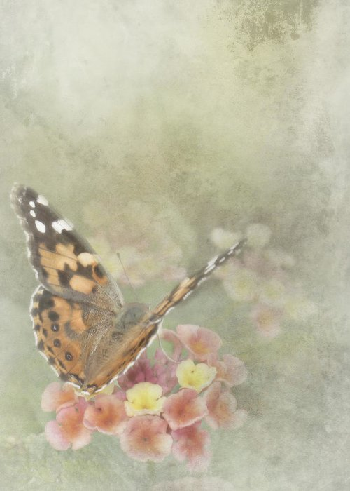 Butterfly Greeting Card featuring the photograph Ready For Flight by David and Carol Kelly