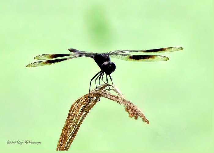 Dragonfly Photograph Greeting Card featuring the photograph Ready for TakeOff by Lucy VanSwearingen