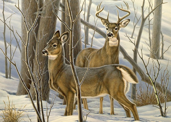 Doe Greeting Cards