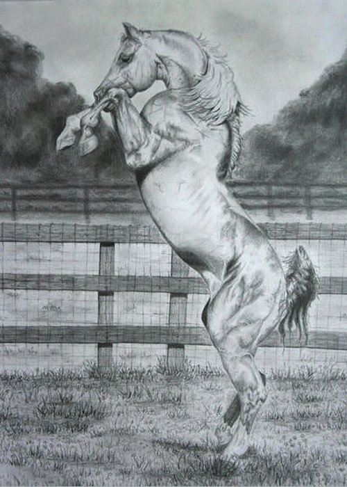 Drawing Greeting Card featuring the painting Rearing Horse by Jodi Bauter