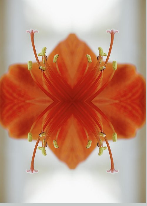 Tranquility Greeting Card featuring the photograph Red Amaryllis Flower by Silvia Otte