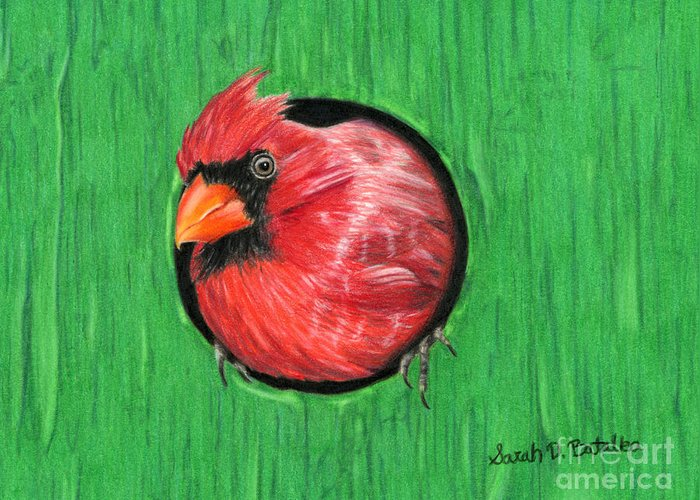 Cardinals Greeting Card featuring the painting Red And Green by Sarah Batalka