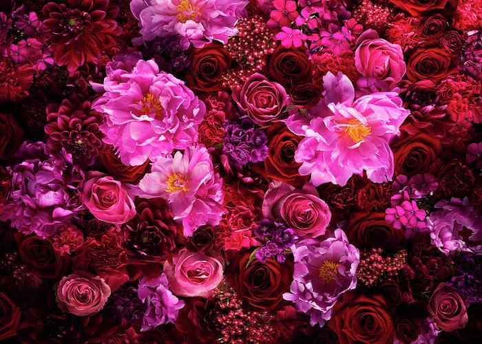 Tranquility Greeting Card featuring the photograph Red And Pink Cut Flowers, Close Up by Jonathan Knowles