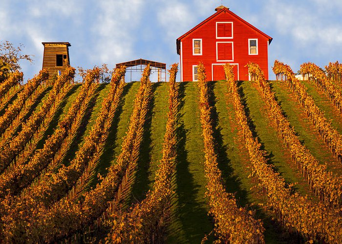 Red Greeting Card featuring the photograph Red Barn In Autumn Vineyards by Garry Gay