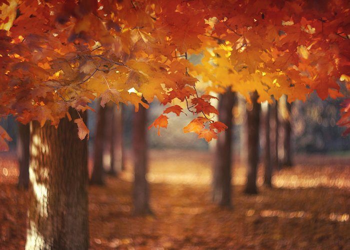 Autumn Leaves Greeting Cards