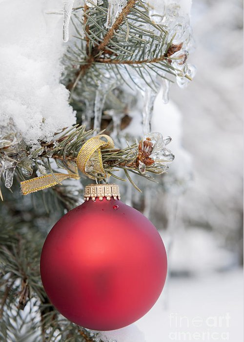 Christmas Greeting Card featuring the photograph Red Christmas Ornament On Snowy Tree by Elena Elisseeva