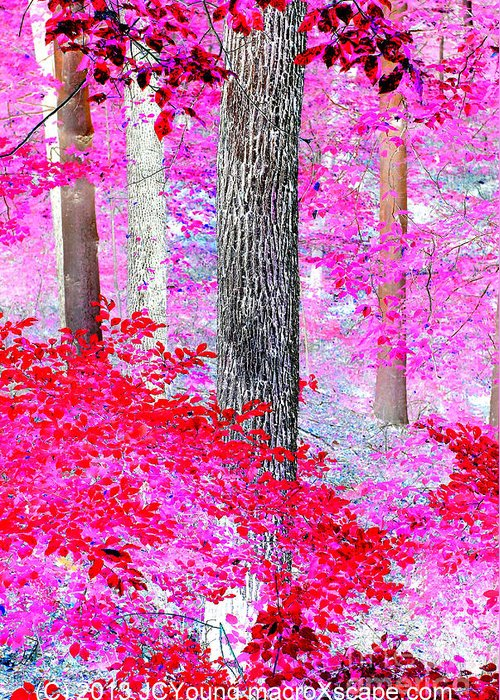 Dreamscape Red Forest Greeting Card featuring the photograph Red Forest by JCYoung MacroXscape