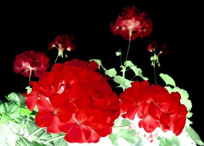 Red Geraniums Greeting Card featuring the digital art Red Geraniums by Will Borden