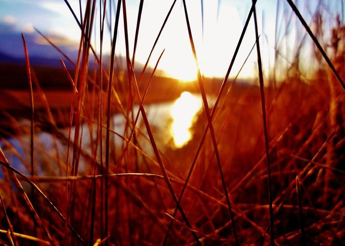 Abstract Greeting Card featuring the photograph Red Grass by Sarah Pemberton