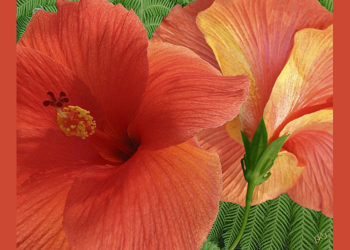 Red Hibiscus Greeting Card featuring the photograph Red Hibiscus by Ben and Raisa Gertsberg