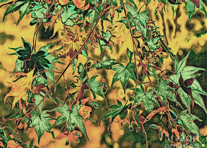 Nature Art Greeting Card featuring the photograph Red Maple 2 by Dennis Lyall