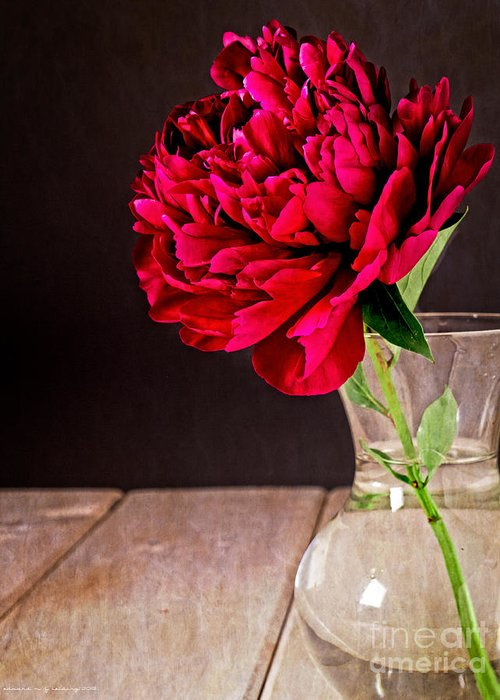 Vase Greeting Card featuring the photograph Red Peony Flower Vase by Edward Fielding
