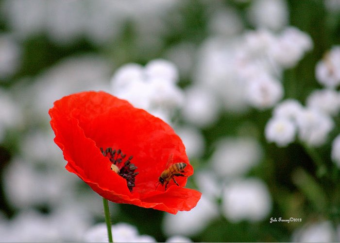 Red Greeting Card featuring the photograph Red Poppy And The Bee by Jale Fancey
