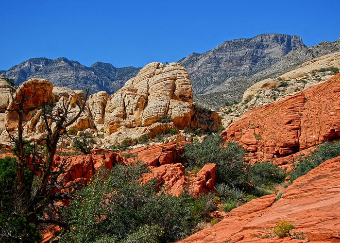Red Rock Canyon Greeting Card featuring the photograph Red Rock Canyon 5 by Chris Brannen