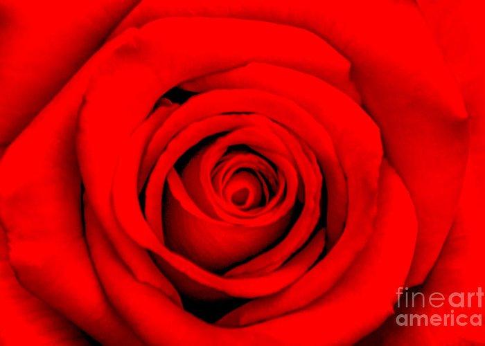 Designs Similar to Red Rose 1 by Az Jackson