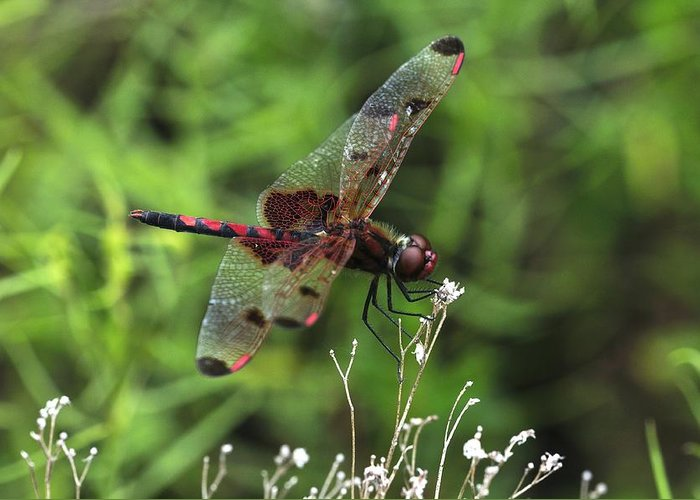 Red Saddlebags Greeting Card featuring the photograph Red Saddlebags by J Scott Davidson