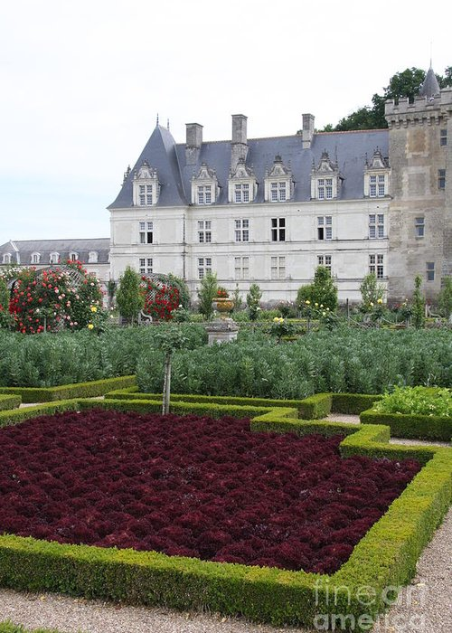 Cabbage Greeting Card featuring the photograph Red Salad And Cabbage Garden - Chateau Villandry by Christiane Schulze Art And Photography