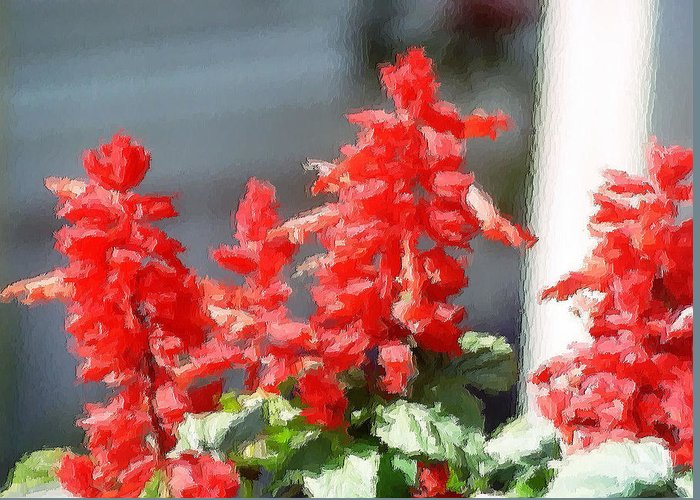 Bright Red Salvia Blooms With The Brush Stroke Effect Greeting Card featuring the photograph Red Salvia Brush Strokes by Belinda Lee