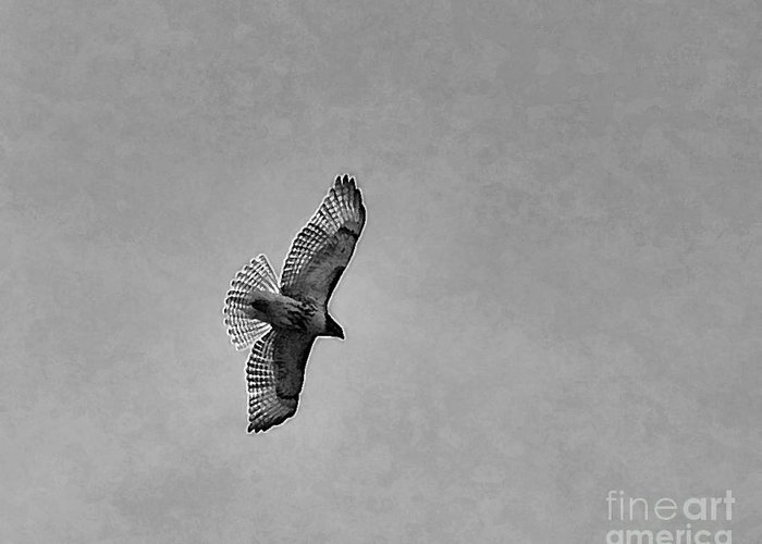 Red Tail Hawk Greeting Card featuring the photograph Red Tail By James Figielski by Paulinskill River Photography