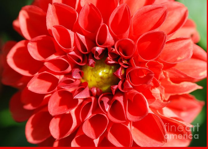 Ed Flower Greeting Card featuring the photograph Red Tubular Flower by Optical Playground By MP Ray