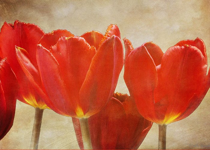 Fine Greeting Card featuring the photograph Red Tulips in Art by Keith Gondron