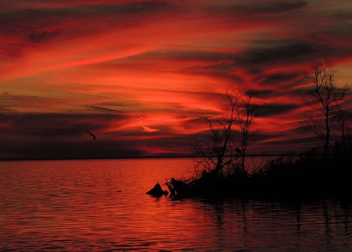 Sunset Greeting Card featuring the photograph Red Velvet by Charlotte Schafer