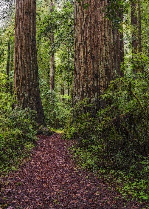 Loree Johnson Greeting Card featuring the photograph Redwood Path by Loree Johnson