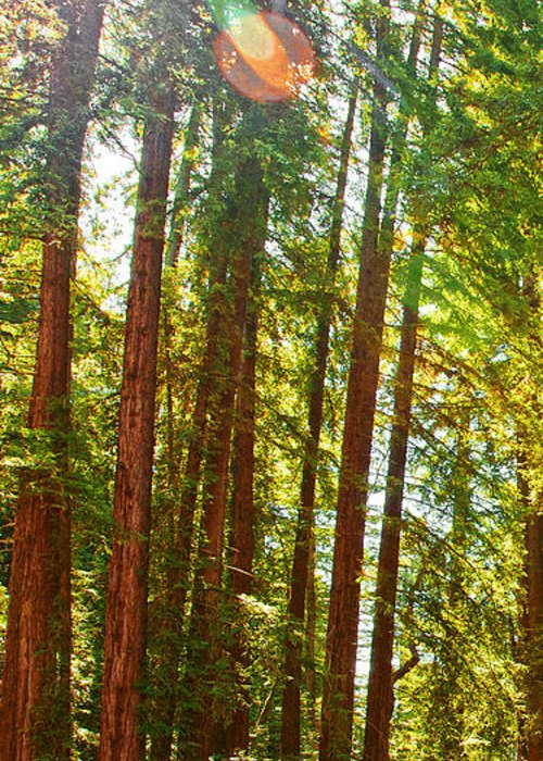 Redwoods Greeting Card featuring the photograph Redwood Wall Mural Panel 1 by Artist and Photographer Laura Wrede