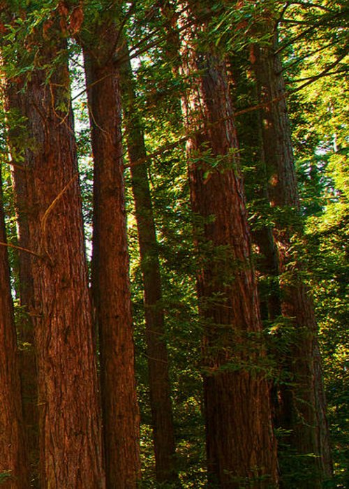 Redwoods Greeting Card featuring the photograph Redwood Wall Mural Panel Three by Artist and Photographer Laura Wrede