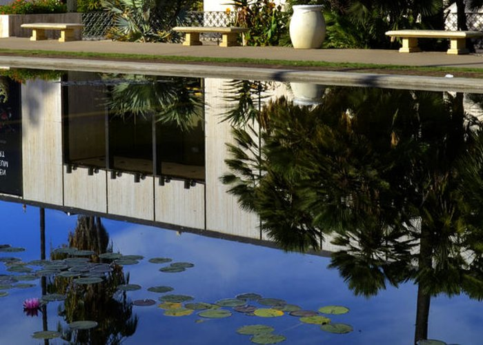 Fish Pond Greeting Card featuring the photograph Reflection by See My Photos