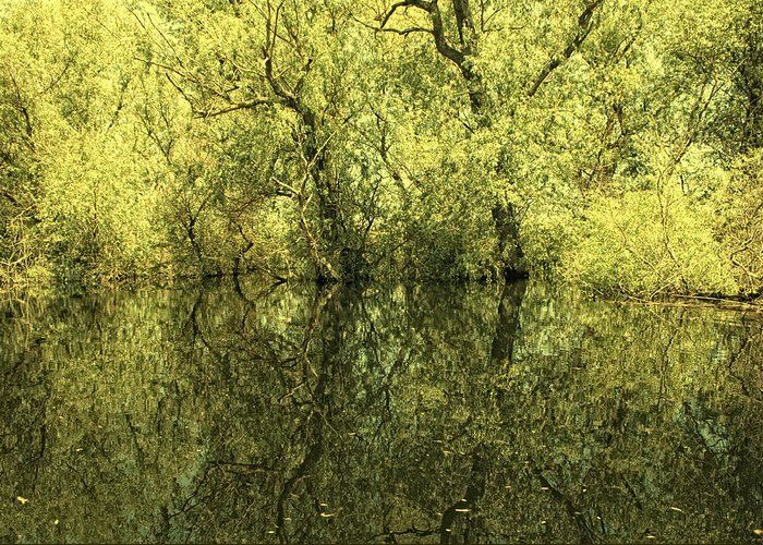 Reflections Greeting Card featuring the photograph Reflections 5 by Vessela Banzourkova