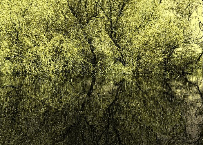 Reflections Greeting Card featuring the photograph Reflections 8 by Vessela Banzourkova