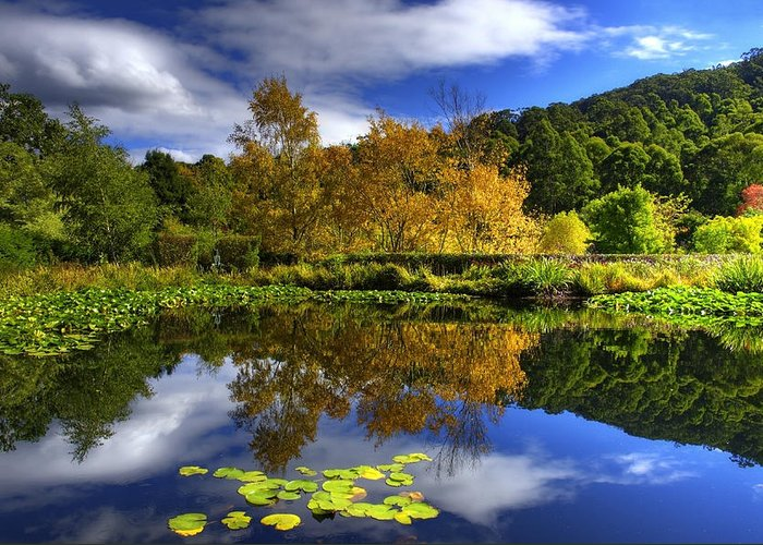 Lilly Pad Greeting Card featuring the photograph Reflections by Damian Morphou
