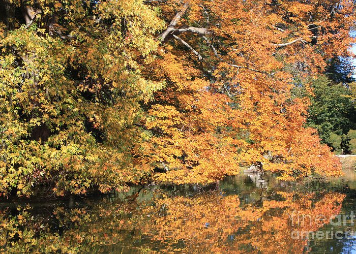 Reflections Ii Greeting Card featuring the photograph Reflections II by John Telfer