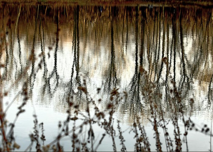 Water Greeting Card featuring the photograph Reflections by Joanne Beebe