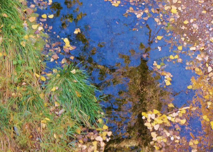 Fall Greeting Card featuring the photograph Reflections Of Fall by Feva Fotos