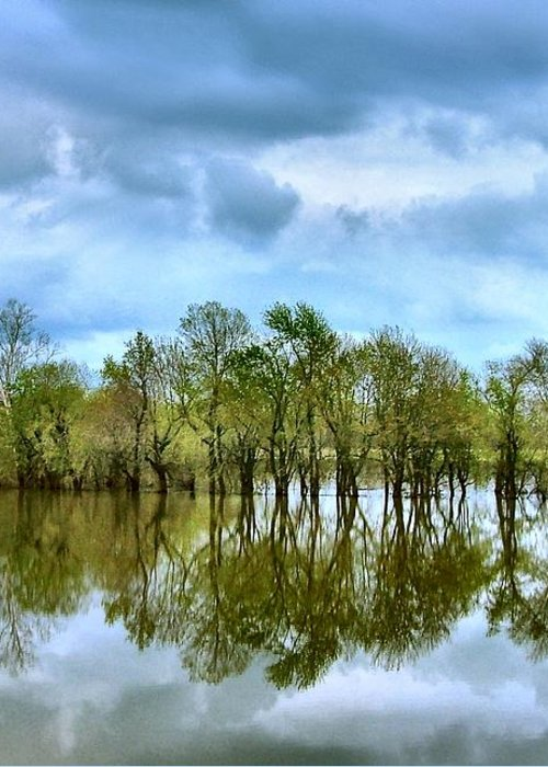 Spring Greeting Card featuring the photograph Reflections Of Spring by Julie Dant