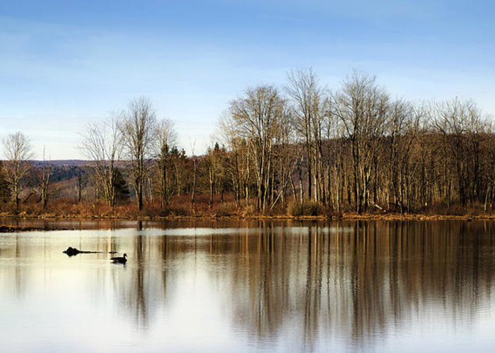 Reflection Greeting Card featuring the photograph Reflections On Golden Pond by Christina Rollo