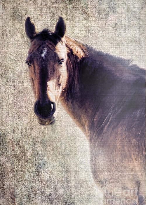 Horse Greeting Card featuring the photograph Reliability by Betty LaRue