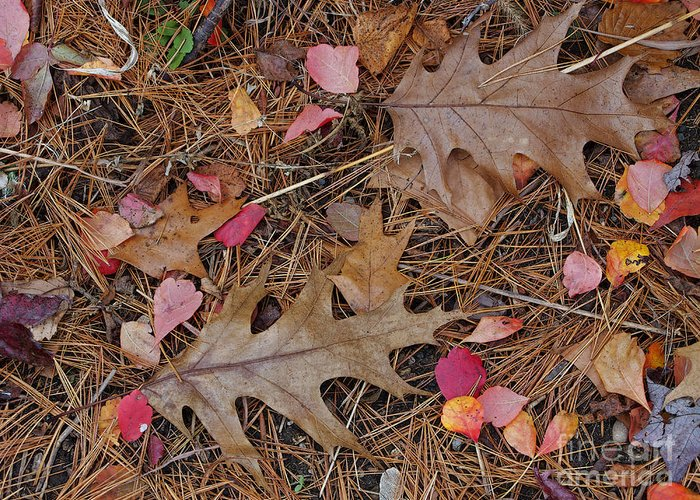 Leaf Greeting Card featuring the photograph Remainders by Ann Horn