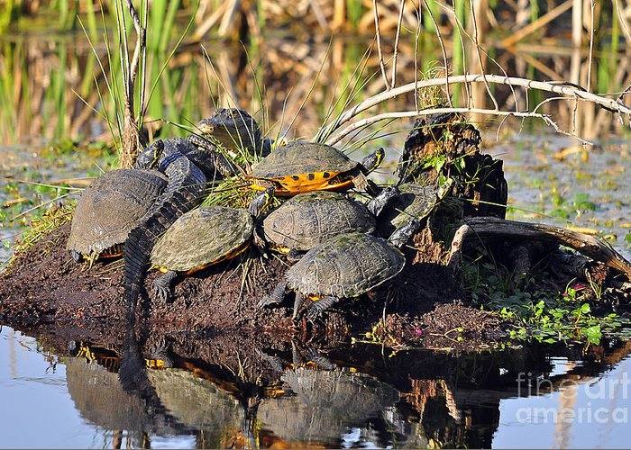 Turtle Greeting Card featuring the photograph Reptile Refuge by Al Powell Photography USA