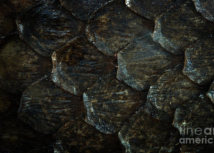 Reptile Skin Texture Greeting Card featuring the photograph Reptile Skin Texture by Jolanta Meskauskiene