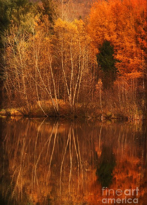 Autumn Greeting Card featuring the photograph Restes D'automne by Aimelle